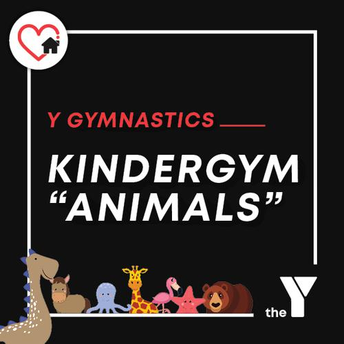 KinderGym Animals Video